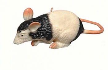 Ratte schwarz / weiß Squeeze 6cm