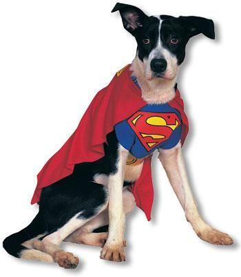 Superman Dog Costume M