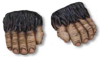 Monkeys feet Brown