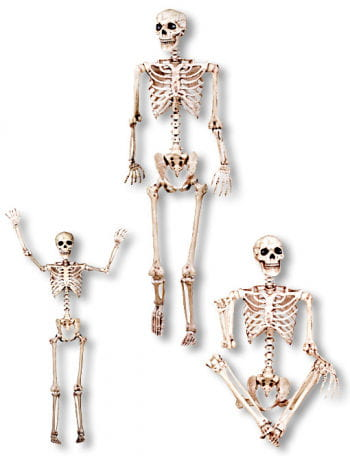 Biegsames Skelett 152 cm