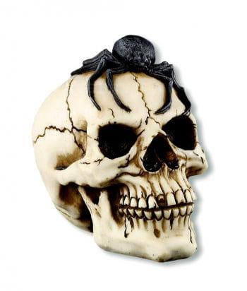Skull with Tarantula