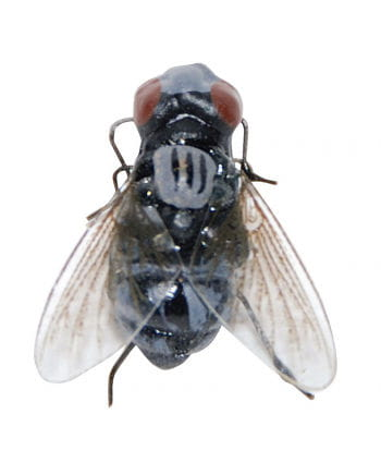 Realistic flesh fly with Magnet