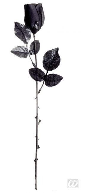 black short-stemmed rose