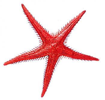 Starfish Red