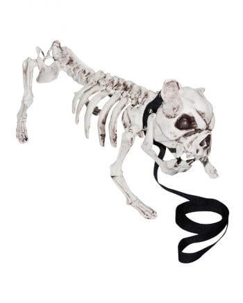 Skeleton Dog with leash