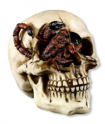 Totenschädel mit Skorpion im Auge