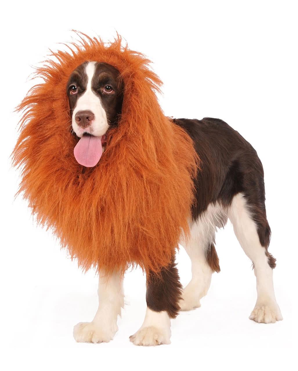 098ea7912 Lions' mane for dogs As a dog wig   horror-shop.com