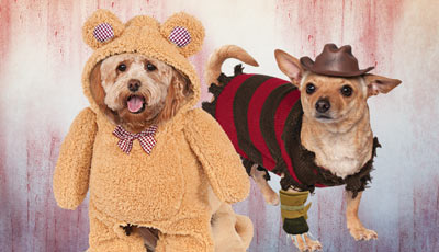 Dogs' Halloween Costumes