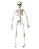 Halloween Skelett 40 cm