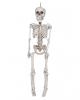 Skeleton Hanging Figure 30 Cm