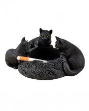 Ascher mit 3 Schwarzen Katzen