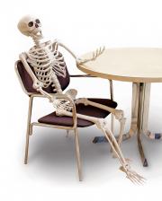 Flexible Skeleton 152 Cm