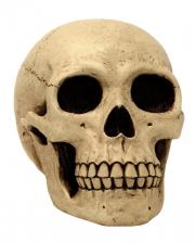 Große Totenkopf Spardose 21 cm