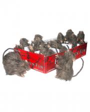 Hairy Mini Rat 10 Cm