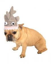 Haifisch Hut für Hunde