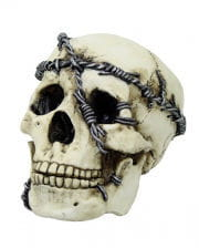 Dead Skull With Barbed Wire