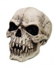 Vampir Totenschädel 17 cm