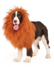 Lions' mane for dogs