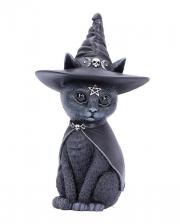 Okkulte Katzenfigur mit Hexenhut