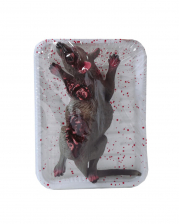 Rat In Cling Film As Halloween Decoration