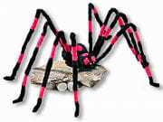 Giant Spider With Button Eyes