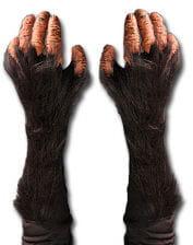 Schimpansen Handschuhe