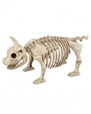 Piggy Skeleton