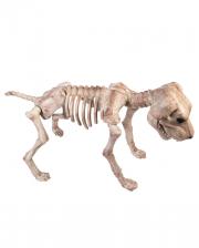 Skelett Hund Deko