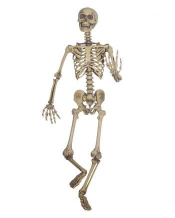 Flexible skeleton life-size
