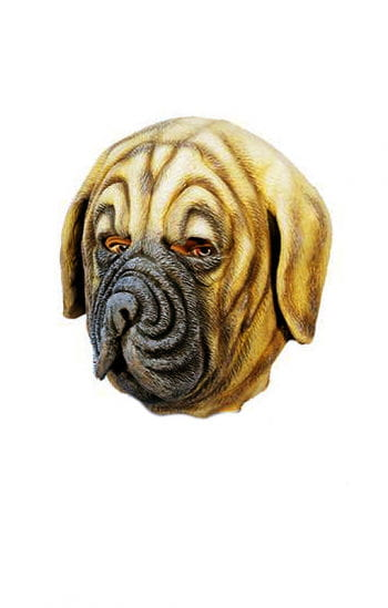 Boxer dog mask made of latex