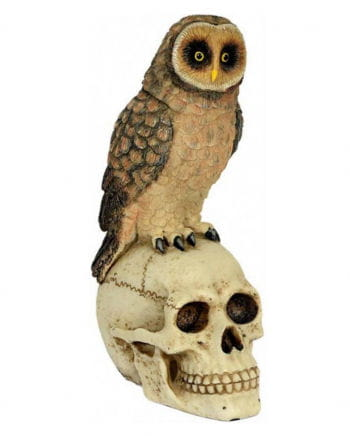 Skull with owl