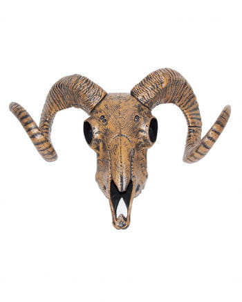 Sheep skull with horns