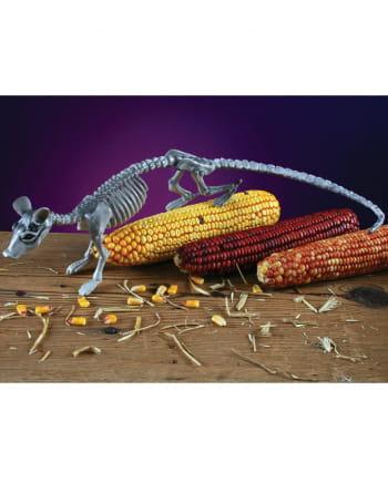Skelett Ratte grau 40cm