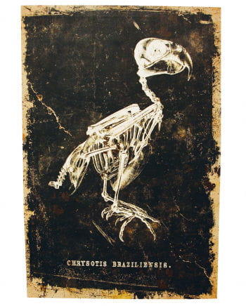 Skeletal bird - canvas print