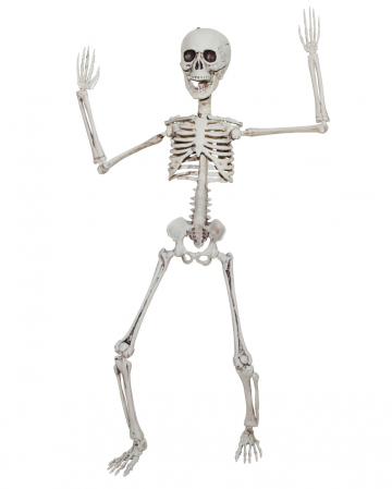 Positionable Skeleton 50cm