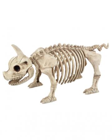 Schweinchen Skelett