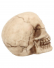 Kleiner Grinsender Totenschädel 12cm