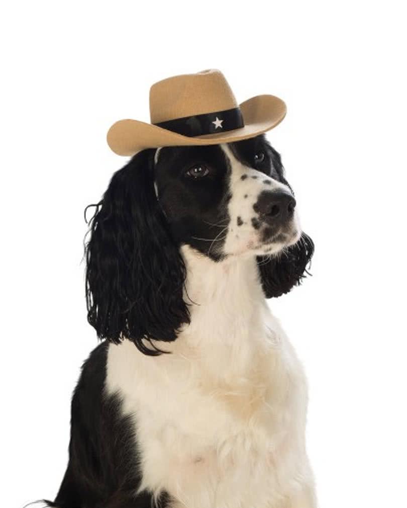 brauner cowboyhut f r hunde tierkost me g nstig kaufen. Black Bedroom Furniture Sets. Home Design Ideas